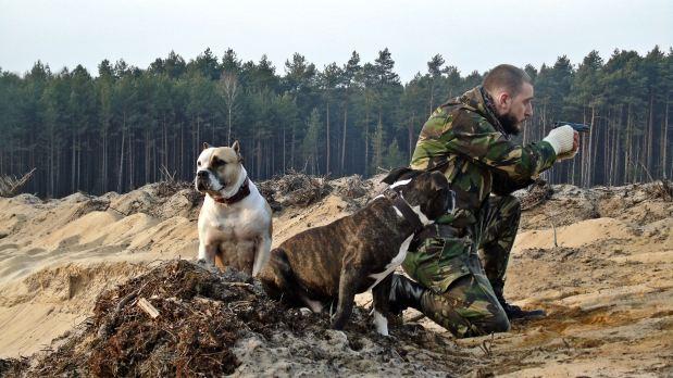 Military, dog, safe, jednostka, ochrona, sprawiedliwość, bezpieczeństwo